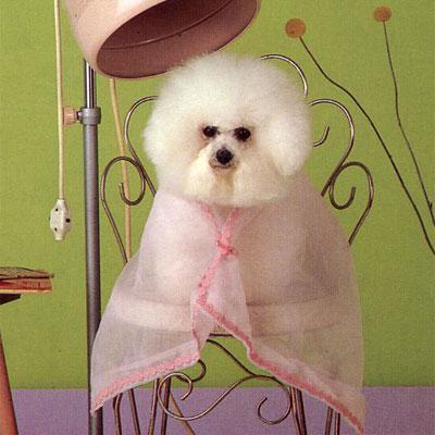 Hund i frisørstol