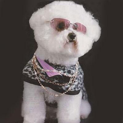stjerne-hund