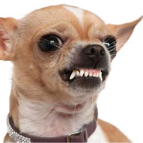 Det er i orden hunden siger fra - men det er ikke okay at den bider!