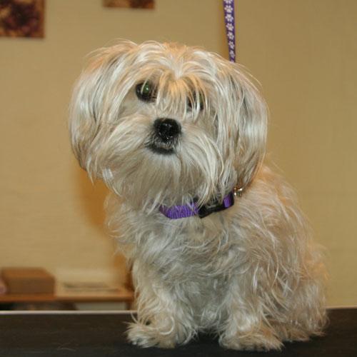 Blandingshunde er ofte nogle charmerende størrelser - men de kan have en krævende pelspleje