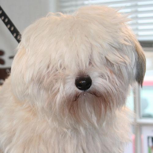Er det svært at få øjenkontakt med din hund? Kontakt Hunde-Salonen
