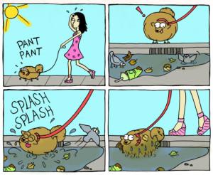 Vask hunden - inden klip