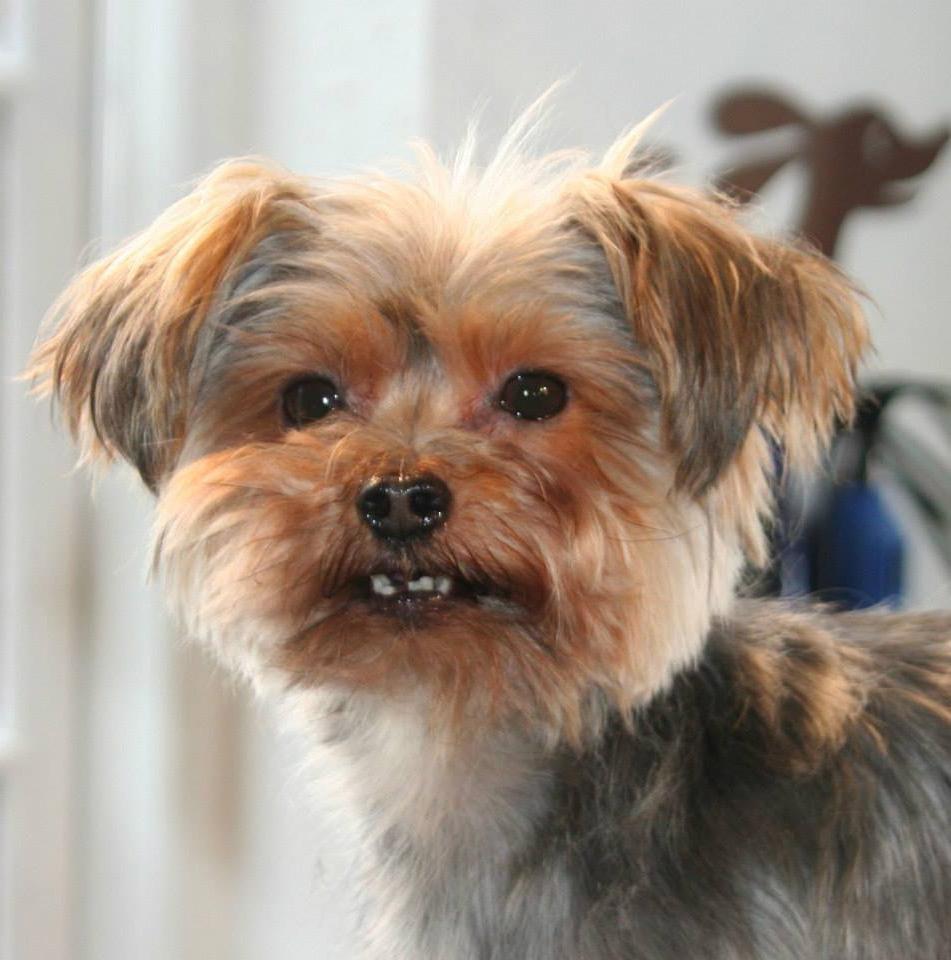 Tryghed og tillid - for både hund og ejer. Det er vores mål i Hunde-Salonen
