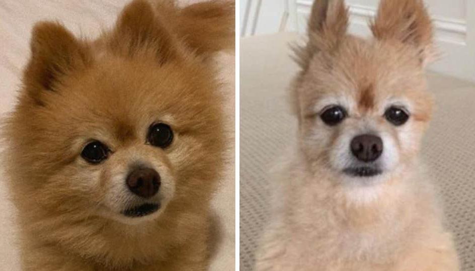 Hvilken hund vil du helst have med hjem? Vær kritisk i dit valg af hundefrisør!